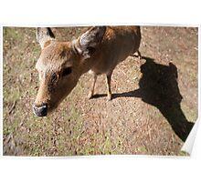 nara deer Poster
