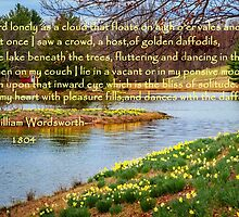 Dances with the daffodils by Bill Wakeley