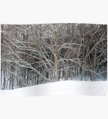 winter woodland scene Poster