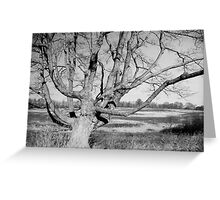 Stately Winter Tree in Black and White Greeting Card