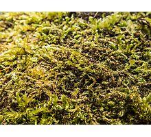 Moss Texture Photographic Print