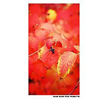 """The Red-Leafed Orange Blotter"" Photographic Print"