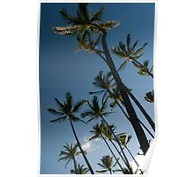 palm trees look up Poster