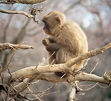 snow monkey by photoeverywhere