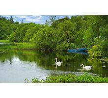 Swans at Cong Photographic Print