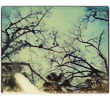 surround Photographic Print