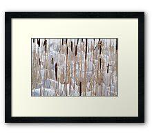 Cattails in snow Framed Print