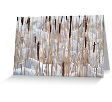 Cattails in snow Greeting Card