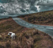White Horse Exmoor by maratshdey