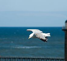 Seagull flying past a lighthouse by photoeverywhere