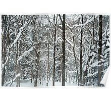 winter forest snow Poster