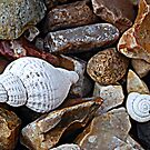 Shells and Stones by Lisa Kent