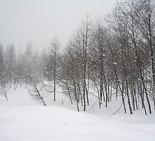 snowfall by photoeverywhere