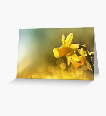 Awakening Daffodils Greeting Card