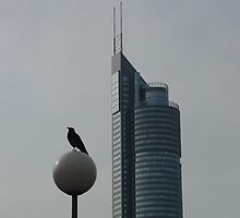 The Crow And The Milleniumtower In Winter by Menega  Sabidussi
