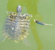 Lazy Summer Afternoon - Floating Turtle by Menega  Sabidussi