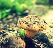 Mushroom  by CRUSSE