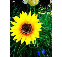 Bright Yellow Sunflower Photographic Print