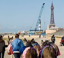 Blackpool donkey rides by photoeverywhere