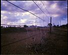 Boggabri Fencing by mewalsh