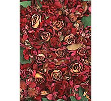 MANY ROSES Photographic Print