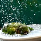 Splish!! Splash!! Splosh!! - Bath Time Maroon-Bellied Conure - NZ by AndreaEL