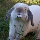 Rabbit eating flower by hulkingrach