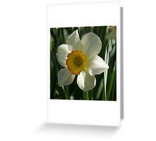 Poet's Daffodil Square Greeting Card
