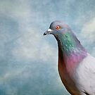 Rock Pigeon by KathleenRinker