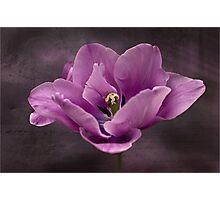 Tiptoe around the tulip Photographic Print