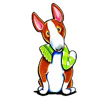 Red Bull Terrier Lets Play Photographic Print