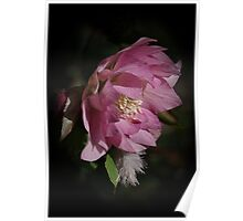 Feathered floral Poster