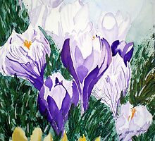 CROCUS FIELD by jyoti kumar
