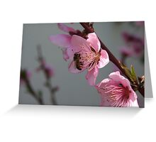 Honey Bee On Open Peach Tree Blossom Greeting Card