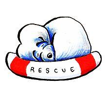 Maltese Rescue Photographic Print