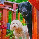 pup & bro.jpg by mikepaulhamus