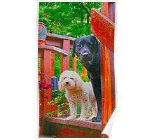pup & bro.jpg Poster
