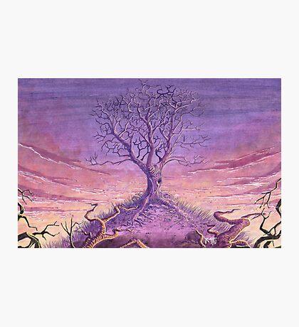 Landscape Lonely Tree Photographic Print