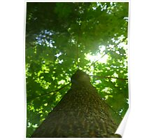 Vertical Tree Poster