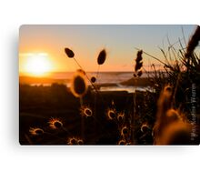 Nature's Warm Embrace Canvas Print