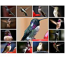 COLLAGE OF HUMMINGBIRDS #1 Photographic Print