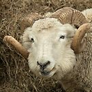 Ram Head by Sue Robinson