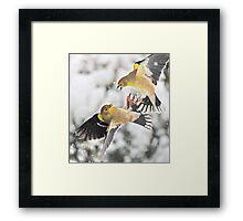 Finch Fight Framed Print