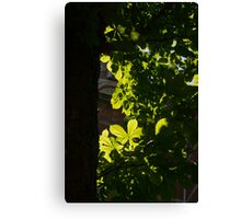 Spotlight on Spring Green Canvas Print