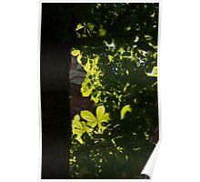 Spotlight on Spring Green Poster