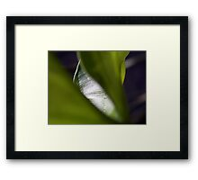 ©NS Green Deep IA Framed Print