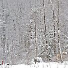 Winter 3/14/14 #1 by Carolyn Clark