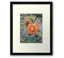 ©NS Cactus Flower IAT Framed Print