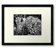 ©NS Yummy Yummy IA Paintography In Monochrome Framed Print