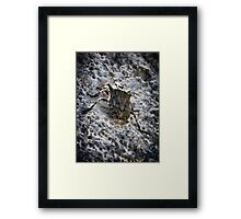 ©NS Like A Beetle IAB Framed Print